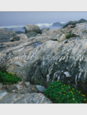 Oceanptsilverweedslide